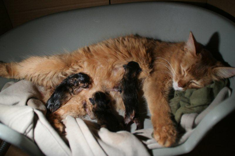 Guinness - 3 chatons