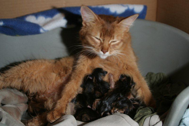 Guinness - 5 chatons