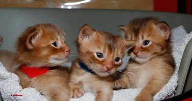 3 chatons de 3 semaines