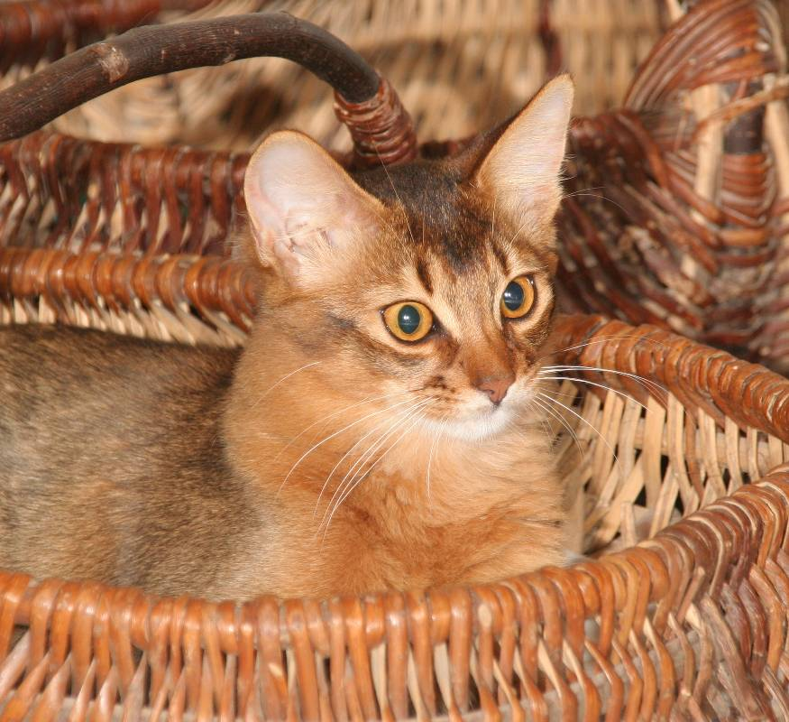 Brownie is the same colour as the wicker basket